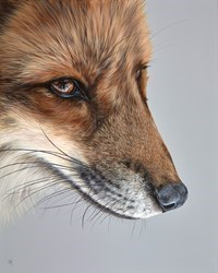 Red Fox by Gina Hawkshaw -  sized 24x30 inches. Available from Whitewall Galleries